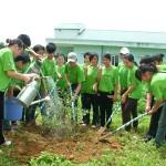 Tác động của khai thác gỗ trái phép và cách khắc phục