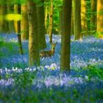 Gỗ trong xây dựng – ưu và nhược điểm của gỗ tự nhiên